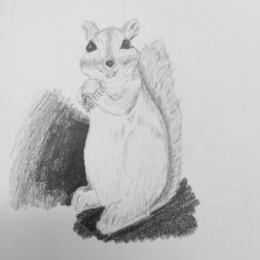 drawing squirrels