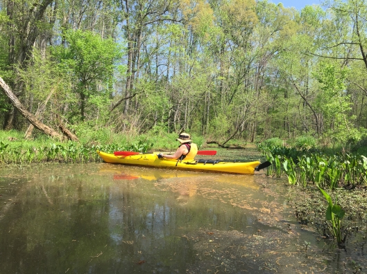 haw river kayaking